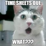 OMG Cat Meme | TIME SHEETS DUE WHAT??? | image tagged in memes,omg cat | made w/ Imgflip meme maker