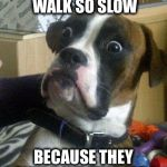 Surprised Dog | WHAT IF HUMANS WALK SO SLOW BECAUSE THEY ONLY HAVE TWO LEGS | image tagged in surprised dog | made w/ Imgflip meme maker