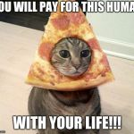 pizza cat | YOU WILL PAY FOR THIS HUMAN WITH YOUR LIFE!!! | image tagged in pizza cat | made w/ Imgflip meme maker