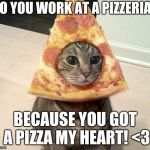 Pizza My Love | DO YOU WORK AT A PIZZERIA? BECAUSE YOU GOT A PIZZA MY HEART! <3 | image tagged in pizza cat,cats,memes,food,love,hook up lines | made w/ Imgflip meme maker