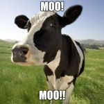 Moo!!! | MOO! MOO!! | image tagged in cow,memes | made w/ Imgflip meme maker