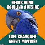 It's just the wind? Not this time. | HEARS WIND HOWLING OUTSIDE TREE BRANCHES AREN'T MOVING! | image tagged in memes,paranoid parrot,wind,scary noises,things that go bump in the night,no sleep | made w/ Imgflip meme maker