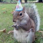 Super Birthday Squirrel Meme | HAPPY BIRTHDAY MICKEY I MISS YOU, BEST FRIEND | image tagged in memes,super birthday squirrel | made w/ Imgflip meme maker