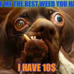 stupid dog face | GIVE ME THE BEST WEED YOU HAVE, I HAVE 10$ | image tagged in stupid dog face | made w/ Imgflip meme maker