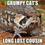 Grumpy Toad Meme | GRUMPY CAT'S LONG LOST COUSIN | image tagged in memes,grumpy toad | made w/ Imgflip meme maker