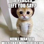Cute Cat | 18 PLACES LEFT YOU SAY? NOW I WANT TO MEET THAT MURDERER TOO | image tagged in cute cat | made w/ Imgflip meme maker
