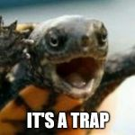 New Star was character Admiral Ackturtle. | IT'S A TRAP | image tagged in turtle say what,it's a trap,star wars,funny | made w/ Imgflip meme maker