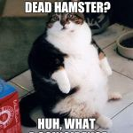 fat cat | WHAT, ANOTHER DEAD HAMSTER? HUH, WHAT A COINCIDENCE | image tagged in fat cat | made w/ Imgflip meme maker