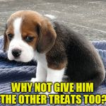 Cute dog | WHY NOT GIVE HIM THE OTHER TREATS TOO? | image tagged in sad dog,meme,cute puppy,cute dog | made w/ Imgflip meme maker