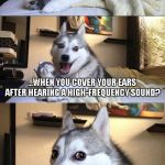 Bad Pun Dog Meme | WHAT DO YOU SAY... ...WHEN YOU COVER YOUR EARS AFTER HEARING A HIGH-FREQUENCY SOUND? IT HERTZ! | image tagged in memes,bad pun dog | made w/ Imgflip meme maker