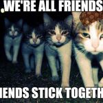 Wrong Neighboorhood Cats Meme | WE'RE ALL FRIENDS FRIENDS STICK TOGETHER | image tagged in memes,wrong neighboorhood cats,scumbag | made w/ Imgflip meme maker
