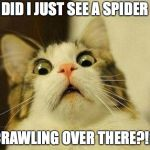 Scared Cat Meme | DID I JUST SEE A SPIDER CRAWLING OVER THERE?!? | image tagged in memes,scared cat | made w/ Imgflip meme maker