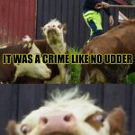 Bad pun cow  | SOMEONE STOLE SOME MILK LAST NIGHT AND ONE COW WAS EVEN MURDERED IT WAS A CRIME LIKE NO UDDER | image tagged in bad pun cow | made w/ Imgflip meme maker
