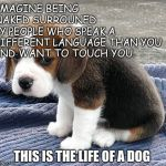 Life of a dog | IMAGINE BEING NAKED SURROUNED BY PEOPLE WHO SPEAK A DIFFERENT LANGUAGE THAN YOU AND WANT TO TOUCH YOU. THIS IS THE LIFE OF A DOG | image tagged in dog | made w/ Imgflip meme maker