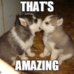 raydog and dashhopes as friends | THAT'S AMAZING | image tagged in memes,cute puppies,raydog,dashhopes | made w/ Imgflip meme maker