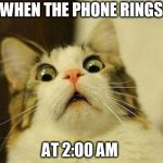 Scared Cat Meme | WHEN THE PHONE RINGS AT 2:00 AM | image tagged in memes,scared cat | made w/ Imgflip meme maker