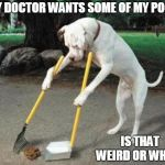 Dog poop | MY DOCTOR WANTS SOME OF MY POOP IS THAT WEIRD OR WHAT? | image tagged in dog poop | made w/ Imgflip meme maker