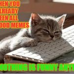 Bored Meme Cat | WHEN YOU ALREADY SEEN ALL THE GOOD MEMES AND NOTHING IS FUNNY ANYMORE | image tagged in bored keyboard cat,bored,good memes | made w/ Imgflip meme maker