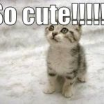 Sad Cat Meme | So cute!!!!!! | image tagged in memes,sad cat | made w/ Imgflip meme maker