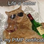 Meow! | Life is better with my PIMP certification | image tagged in funny cat birthday,memes | made w/ Imgflip meme maker