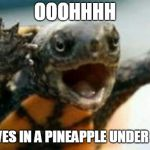 Turtle Say What? | OOOHHHH WHO LIVES IN A PINEAPPLE UNDER THE SEA | image tagged in turtle say what | made w/ Imgflip meme maker