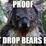 Angry Koala Meme | PROOF THAT DROP BEARS EXIST | image tagged in memes,angry koala,meanwhile in australia,animal meme | made w/ Imgflip meme maker