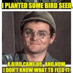 Bad Pun Radar | I PLANTED SOME BIRD SEED. A BIRD CAME UP.  AND NOW I DON'T KNOW WHAT TO FEED IT. | image tagged in bad pun radar | made w/ Imgflip meme maker