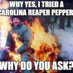 LIGAF Meme | WHY YES, I TRIED A CAROLINA REAPER PEPPER. WHY DO YOU ASK? | image tagged in memes,ligaf | made w/ Imgflip meme maker