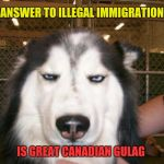 Annoyed Dog | ANSWER TO ILLEGAL IMMIGRATION IS GREAT CANADIAN GULAG | image tagged in annoyed dog | made w/ Imgflip meme maker