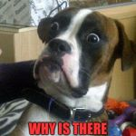 Surprised Dog | WHY IS THERE NO DOG STREAM? | image tagged in surprised dog | made w/ Imgflip meme maker