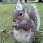 Super Birthday Squirrel Meme | WHEN YOUR THE ONLY ONE EATING AT A PARTY | image tagged in memes,super birthday squirrel | made w/ Imgflip meme maker