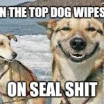 Original Stoner Dog Meme | WHEN THE TOP DOG WIPES OUT ON SEAL SHIT | image tagged in memes,original stoner dog | made w/ Imgflip meme maker