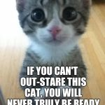 Guess the cat owns you... | IF YOU CAN'T OUT-STARE THIS CAT, YOU WILL NEVER TRULY BE READY FOR CAT OWNERSHIP. | image tagged in i just want friends who love cats drink copious amounts of wine,memes,staring,contest,owner,human slave | made w/ Imgflip meme maker