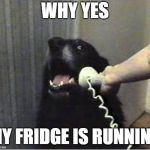 Yes this is dog | WHY YES MY FRIDGE IS RUNNING | image tagged in yes this is dog | made w/ Imgflip meme maker