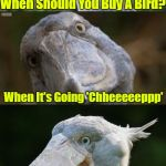 Going once, Going Twice, Going Cheap, Cheap, Cheap | When Should You Buy A Bird? When It's Going 'Chheeeeeppp' | image tagged in bad joke bird 3,memes,animals,birds,bird weekend,google images | made w/ Imgflip meme maker