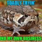Grumpy Toad Meme | TOADLY TRYIN' TO MIND MY OWN BUSINESS HERE | image tagged in memes,grumpy toad | made w/ Imgflip meme maker