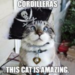 Spangles Meme | CORDILLERAS THIS CAT IS AMAZING. | image tagged in memes,spangles | made w/ Imgflip meme maker