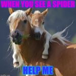 Foal Of Mine Meme | WHEN YOU SEE A SPIDER HELP ME | image tagged in memes,foal of mine | made w/ Imgflip meme maker