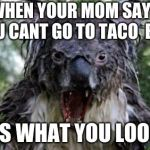Angry Koala Meme | WHEN YOUR MOM SAYS YOU CANT GO TO TACO  BELL THIS IS WHAT YOU LOOK LIKE | image tagged in memes,angry koala | made w/ Imgflip meme maker