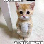 Cute Cat Meme | I DEMAND... TO SEE A LAWYER | image tagged in memes,cute cat | made w/ Imgflip meme maker