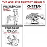 The world's fastest animals meme