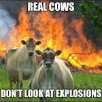 Evil Cows Meme | REAL COWS DON'T LOOK AT EXPLOSIONS | image tagged in memes,evil cows | made w/ Imgflip meme maker