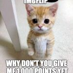 Cute Cat Meme | IMGFLIP WHY DON'T YOU GIVE ME 1,000 POINTS YET | image tagged in memes,cute cat | made w/ Imgflip meme maker