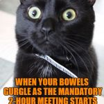 Please let the meeting end on time, or I will lose my sh- | WHEN YOUR BOWELS GURGLE AS THE MANDATORY 2-HOUR MEETING STARTS | image tagged in memes,woah kitty,toilet humor,funny,long meetings | made w/ Imgflip meme maker