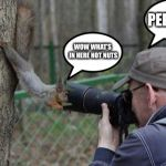 Jehovas Witness Squirrel Meme | WOW WHAT'S IN HERE NOT NUTS PERFECT! | image tagged in memes,jehovas witness squirrel | made w/ Imgflip meme maker