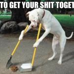 Dog poop | TRY TO GET YOUR SHIT TOGETHER | image tagged in dog poop | made w/ Imgflip meme maker