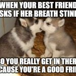 Bad Breath Checker (Doggo Week March 10-16 a Blaze_the_Blaziken and 1forpeace Event) | WHEN YOUR BEST FRIEND ASKS IF HER BREATH STINKS SO YOU REALLY GET IN THERE BECAUSE YOU'RE A GOOD FRIEND | image tagged in memes,cute puppies,best friends,doggo week,bad breath,funny | made w/ Imgflip meme maker