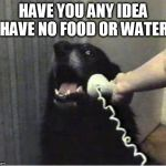 Yes this is dog | HAVE YOU ANY IDEA I HAVE NO FOOD OR WATER? | image tagged in yes this is dog | made w/ Imgflip meme maker