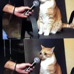 Cat interview crying meme
