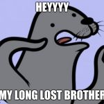 Homophobic Seal Meme | HEYYYY MY LONG LOST BROTHER | image tagged in memes,homophobic seal | made w/ Imgflip meme maker